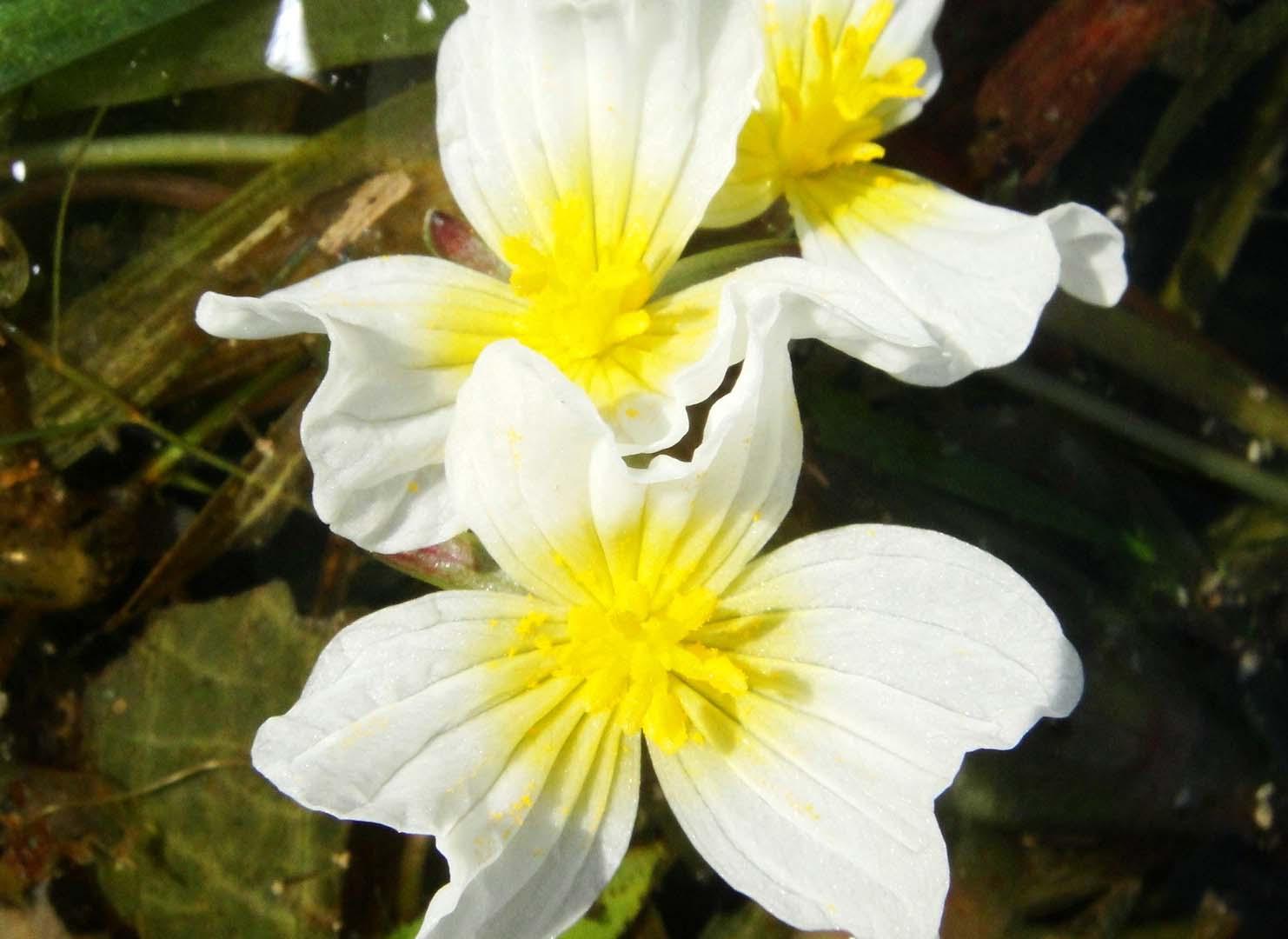 广东水生植物,广东水生植物值得你选择吗