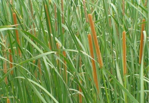 东莞水生植物,东莞水生植物大作战