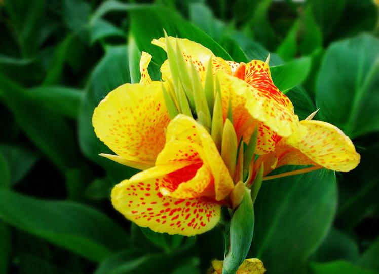 惠州水生植物,惠州水生植物不同季节效果如何