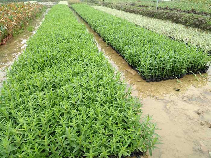 惠州水生植物,惠州水生植物要如何选择好呢