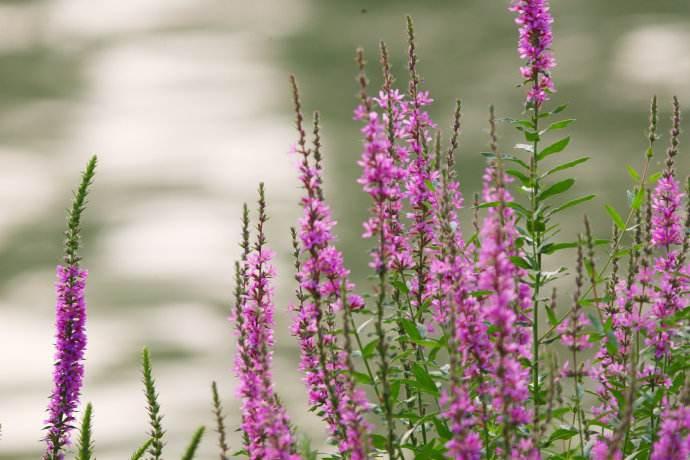 深圳水生植物,深圳水生植物要需要什么呢